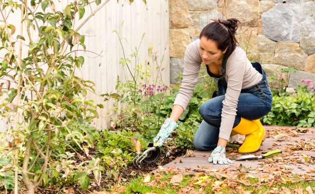How To Prepare Your Garden For Winter Today