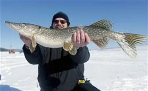 Image: Fisherman holds northern pike