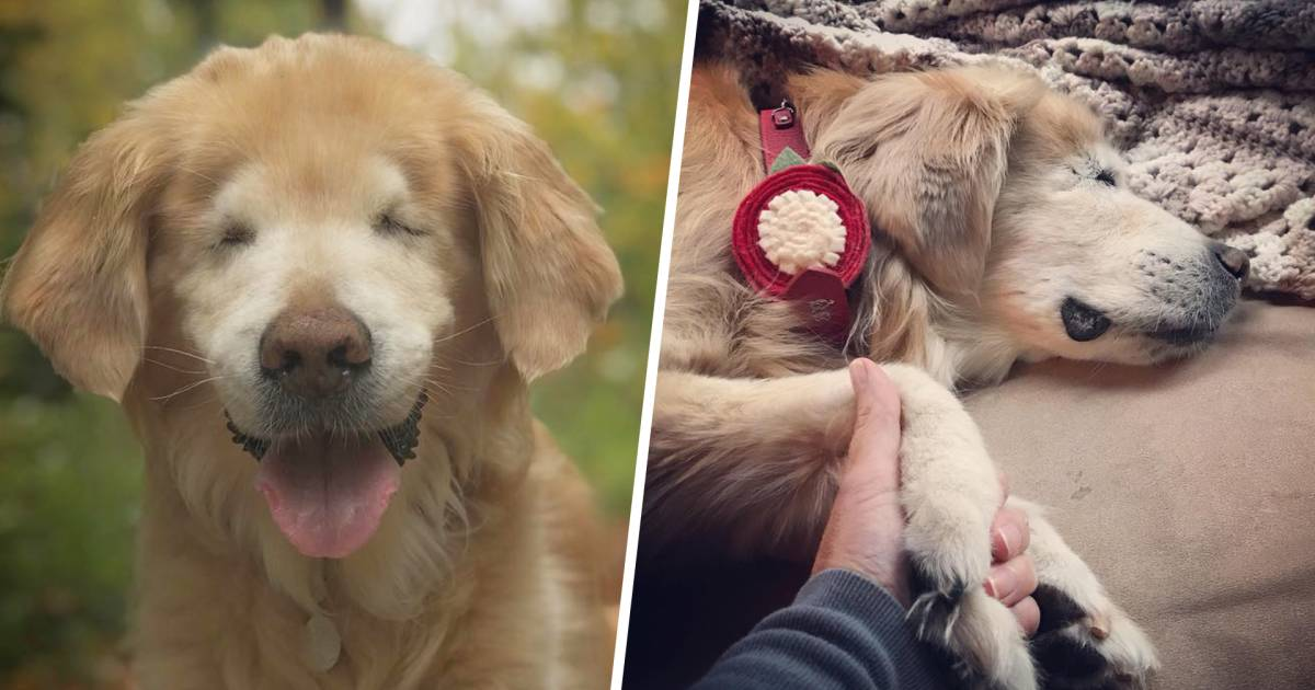 Smiley the blind therapy dog has died