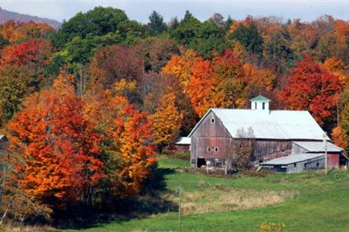 Fall Foliage Wallpaper It Ll Make You See Red Or Not Warming Could Dull Fall