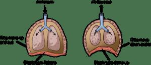 Biology Animal Respiration  Shmoop Biology