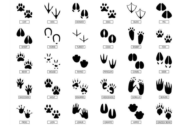 Animals footprints. Animal feet silhouette, frog footprint