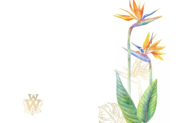 clip flower tropical border watercolor floral exotic clipart thehungryjpeg graphics