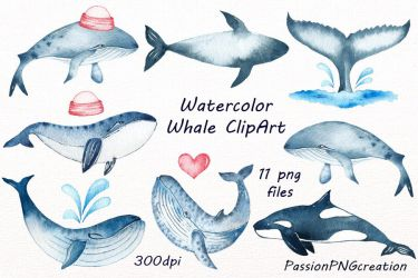 Watercolor Whale Clipart By PassionPNGcreation TheHungryJPEG com