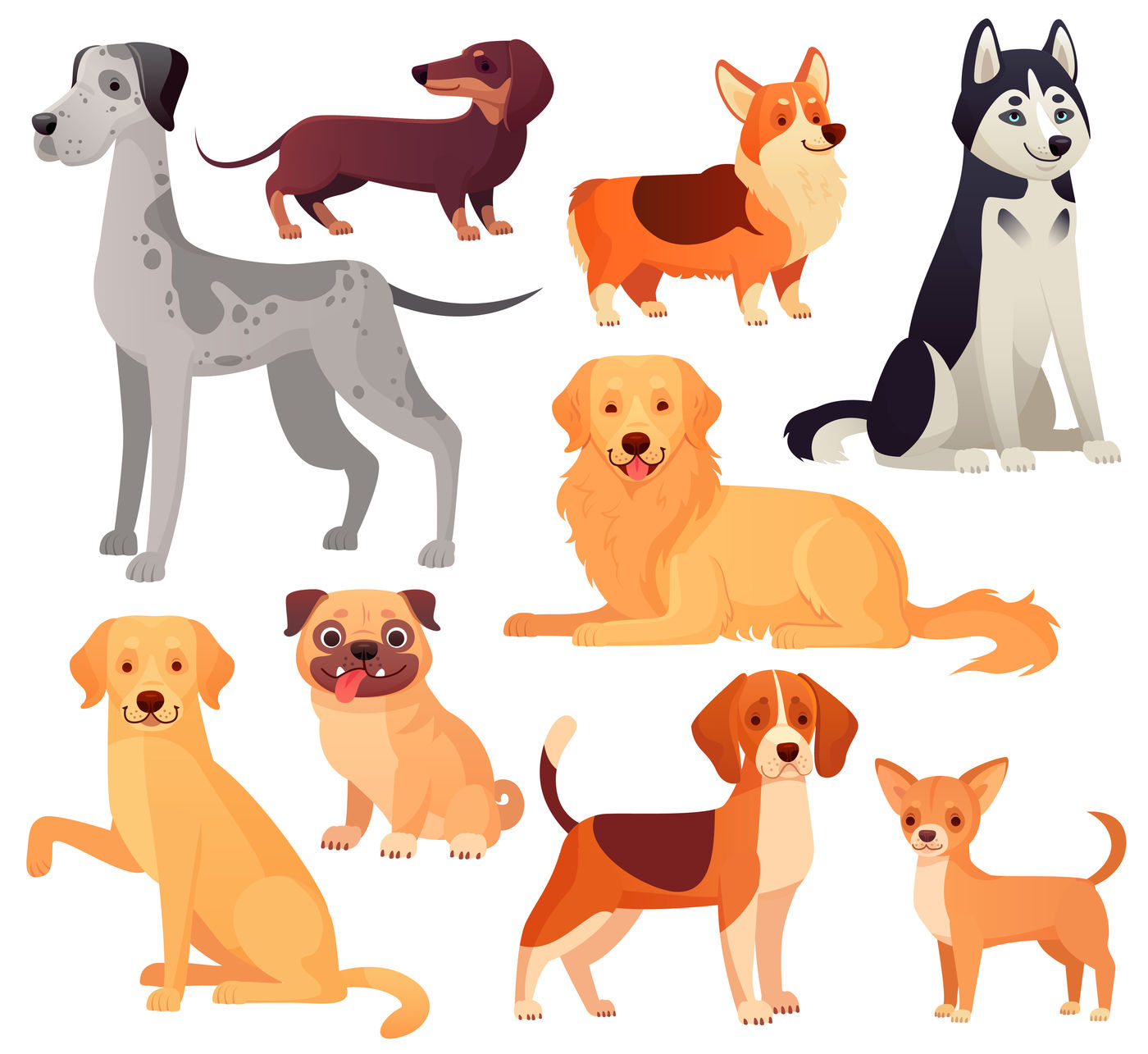 dogs pets character labrador