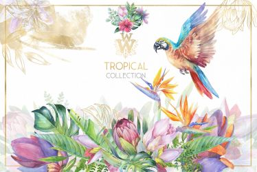 border floral flower clipart exotic clip tropical watercolor collection graphics borders thehungryjpeg icecream wonderwonder cart clipground