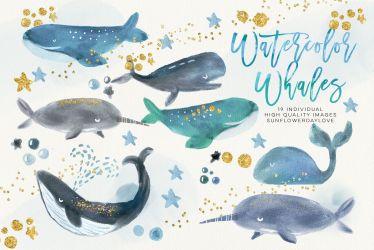 Whale Watercolour Clip Arts Whale clipart Marine mammals clip art By Sunflower Day Love TheHungryJPEG com