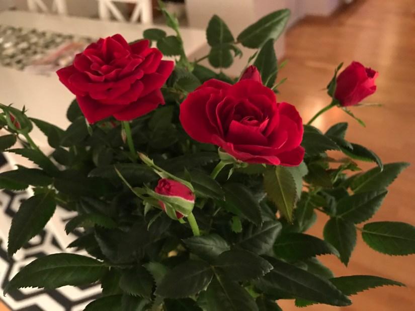 Födelsedag - rosor