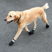 Sports & Protective Dog Boots. Great deals at zooplus.ie!