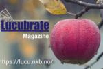 20180120 Lucubratemagazinemark
