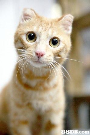 香港群貓會 - 保障貓隻的權益,多方面推廣人與貓在社區和諧共處的信念,教育飼養貓隻的正確觀,並透過 ...