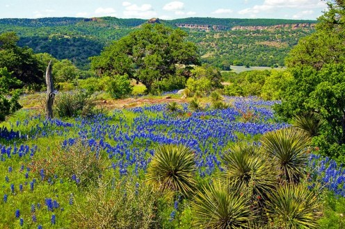 Image result for Texas Hill Country