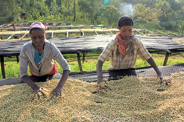 Coffee workers - COURTESY OF GROUNDS FOR HEALTH | © ADAM PESCE