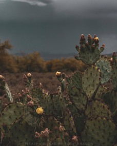 Tony Aragon, local photographer, captures the beauty and story of life in the desert. - TONY ARAGON