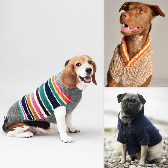 Trendy Winter Clothes For Dogs