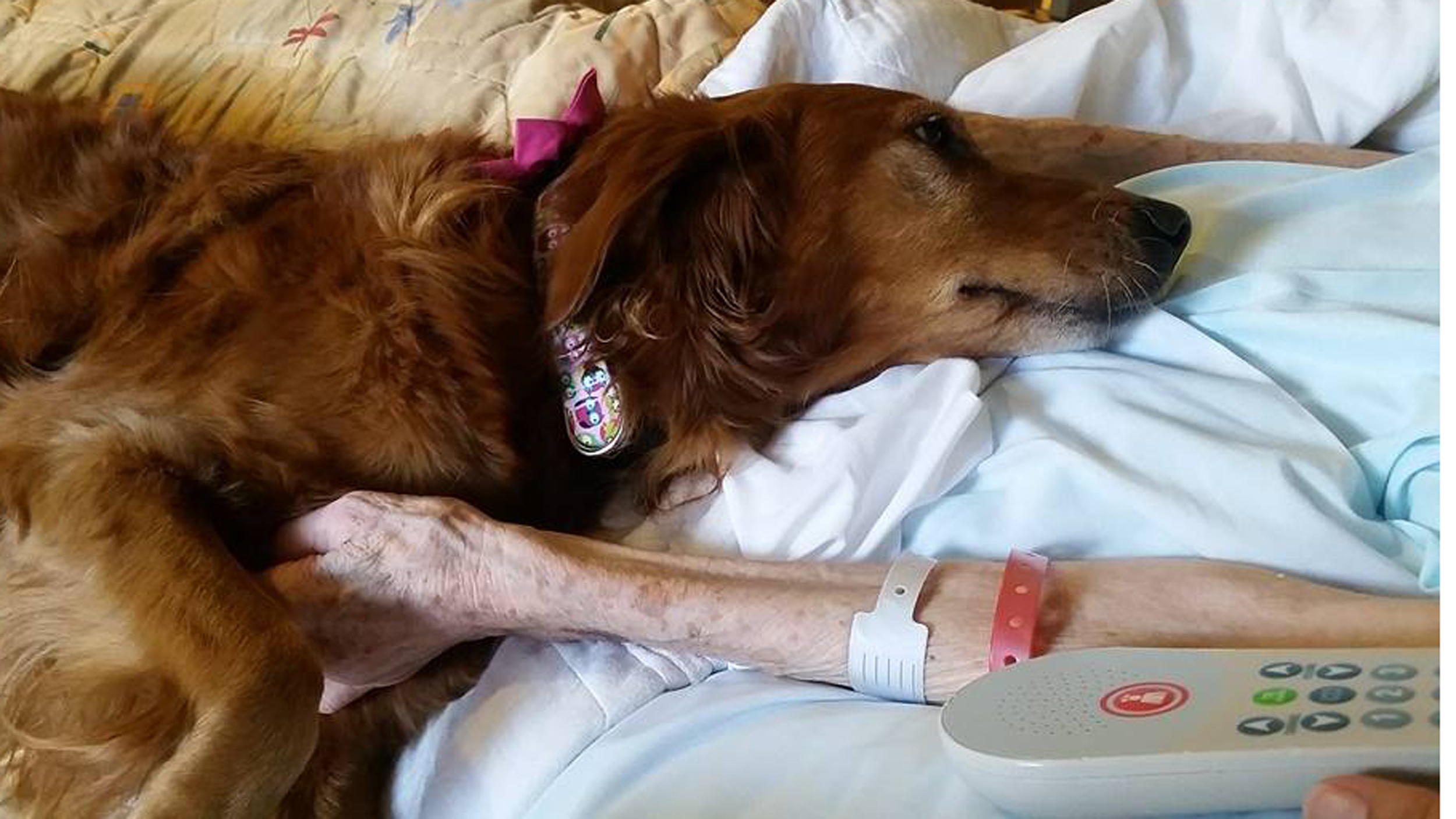Hospice Therapy Dog JJ Consoles Dying Woman Winning