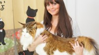 Samson the cat billed as largest feline in New York at 28 ...