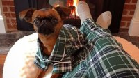 Dog pajamas allow owners to curl up with their pets in ...