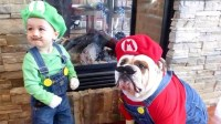 Cute pet costumes for Halloween - TODAY.com