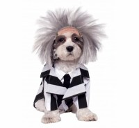 Halloween dog costume ideas: 32 easy, cute costumes for ...
