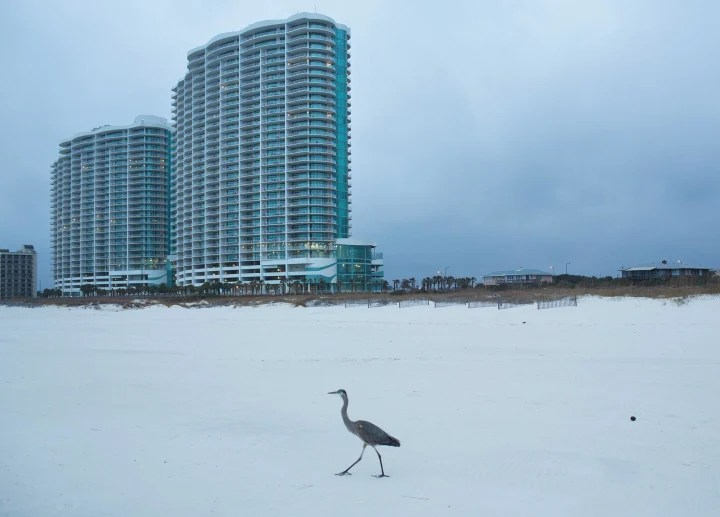 Image: The Turquoise Place condominium buildings rise above Orange Beach, Ala.