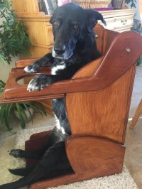 Dog with esophageal disorder gets custom-built high chair