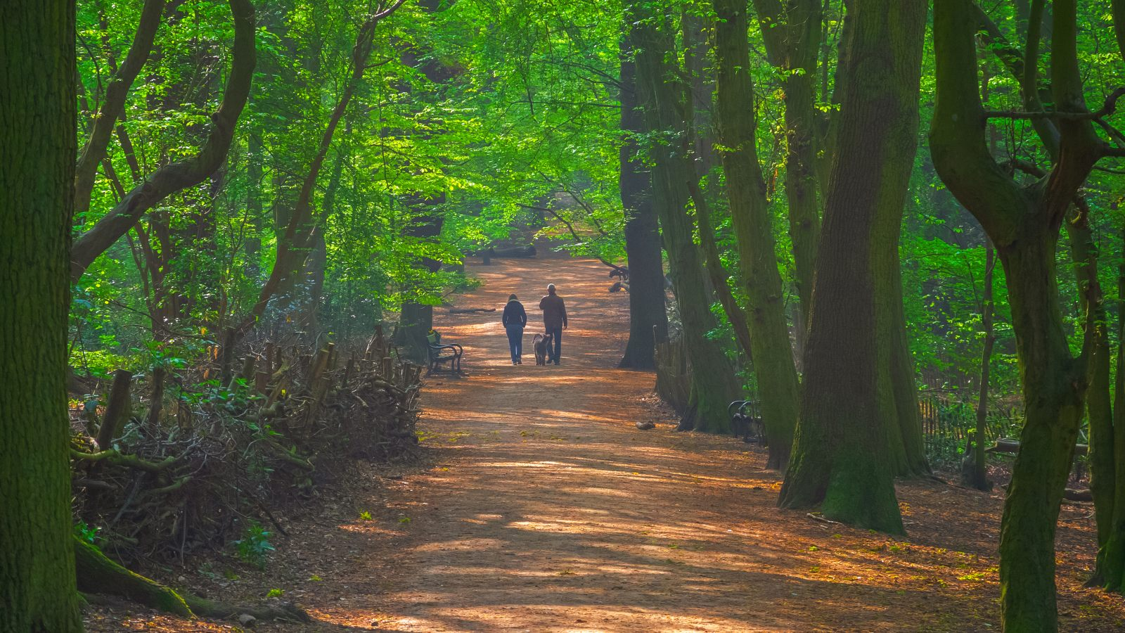 According to sources, the indicative forest woods condo price during the official launch ranges as follows (as of 24 september 2016): The Best Forests Near London Blog Zipcar