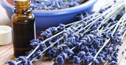 Health Benefits Of Lavender