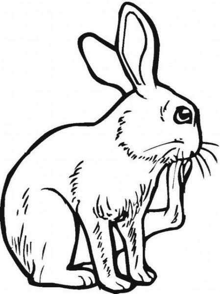 Free rabbit in hutch coloring pages