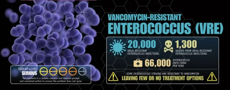 Vancomycin-resistant enterococci are a major hospital nuisance.