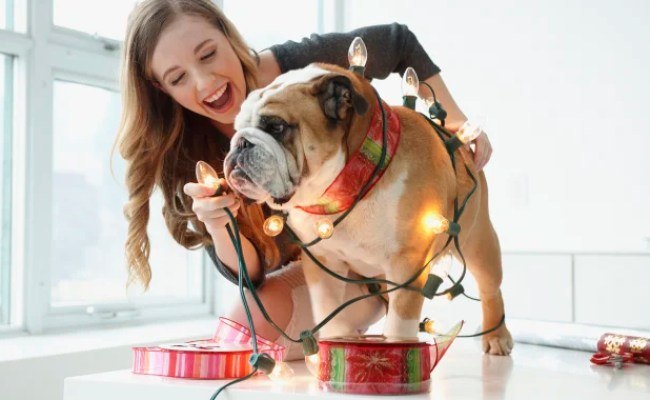 15 Unique Gifts For Dog Lovers Pet Owners 2018