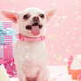 The 14 Best Gifts For Dog Lovers 2019