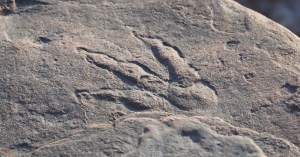 Four-year-old girl discovers 220 million-year-old dinosaur footprint on a beach in Wales