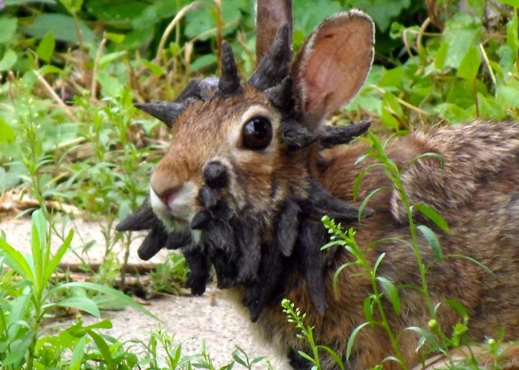 viral internet frankenstein rabbit