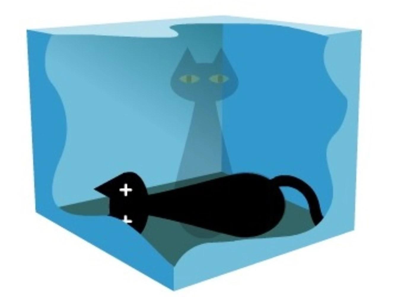 bizarre schrodinger s cat