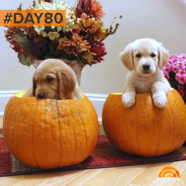 Cute Baby With Parents Wallpaper Babies Versus Puppies Pumpkin Style Today Com