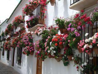 Blumen fr den Balkon im Schatten Blhen im Dunkeln  bauemotionde