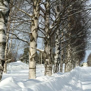 Mellan träden, … (9/365)