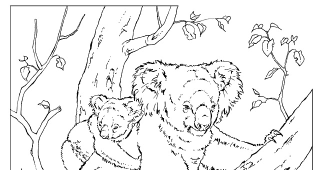 National Geographic Animal Pages Coloring Pages