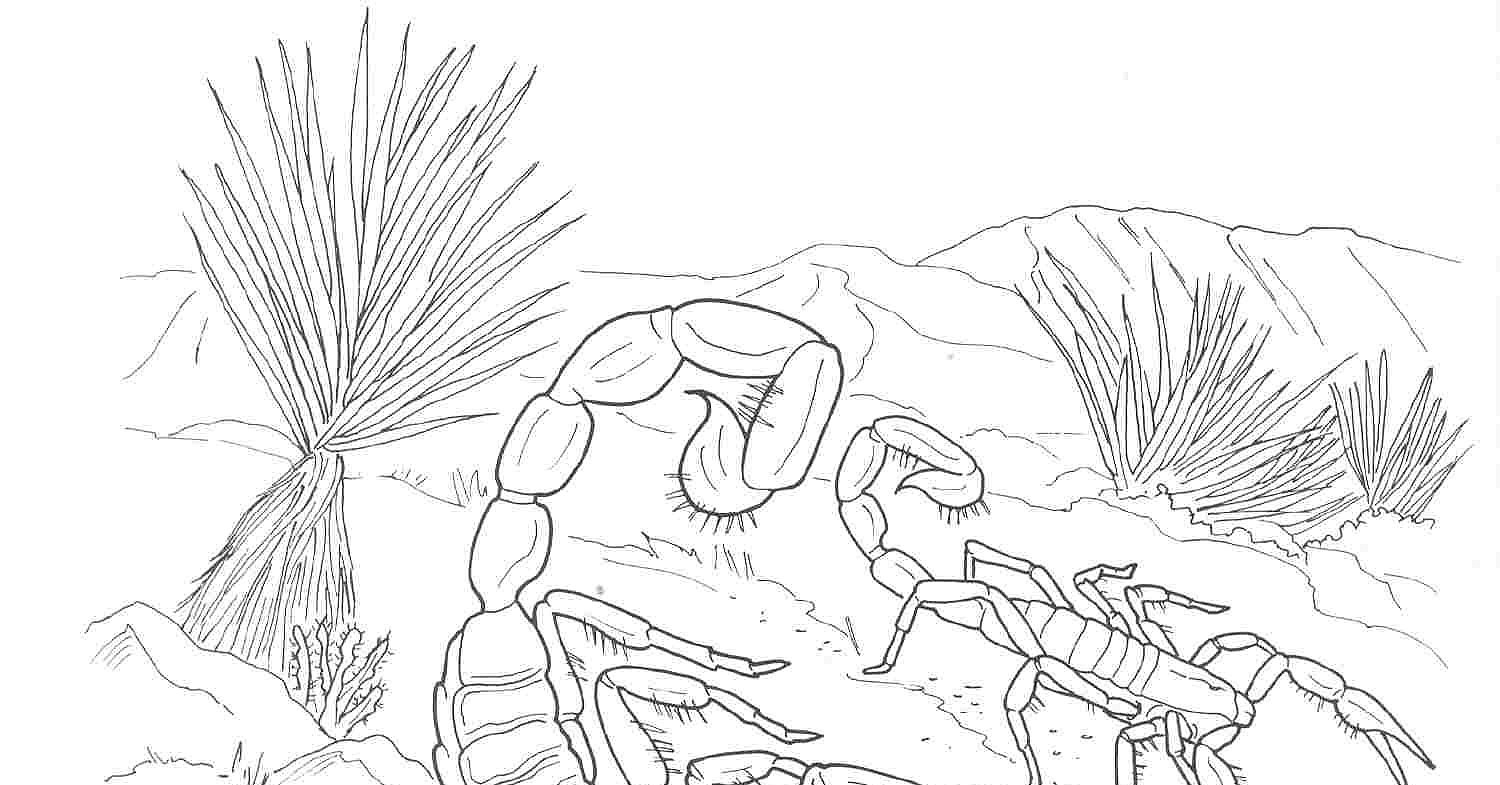 Arizona Desert Coloring Pages