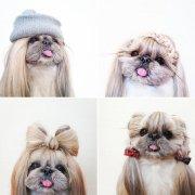 kuma dog's instagram hairstyles
