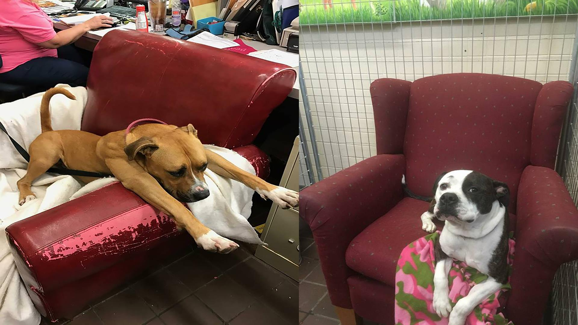 chairs for dogs target folding shelter get donated to make them feel at home