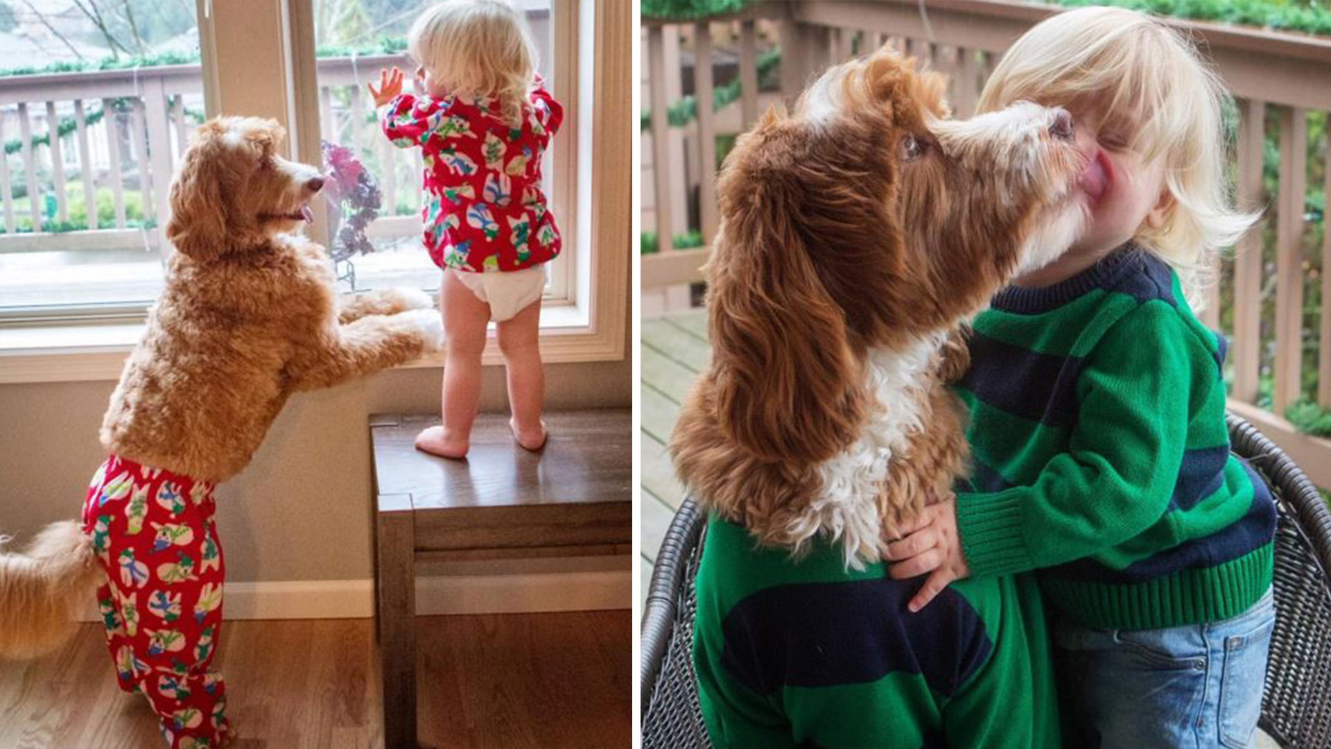 Dog And Toddler Rock Matching Outfits
