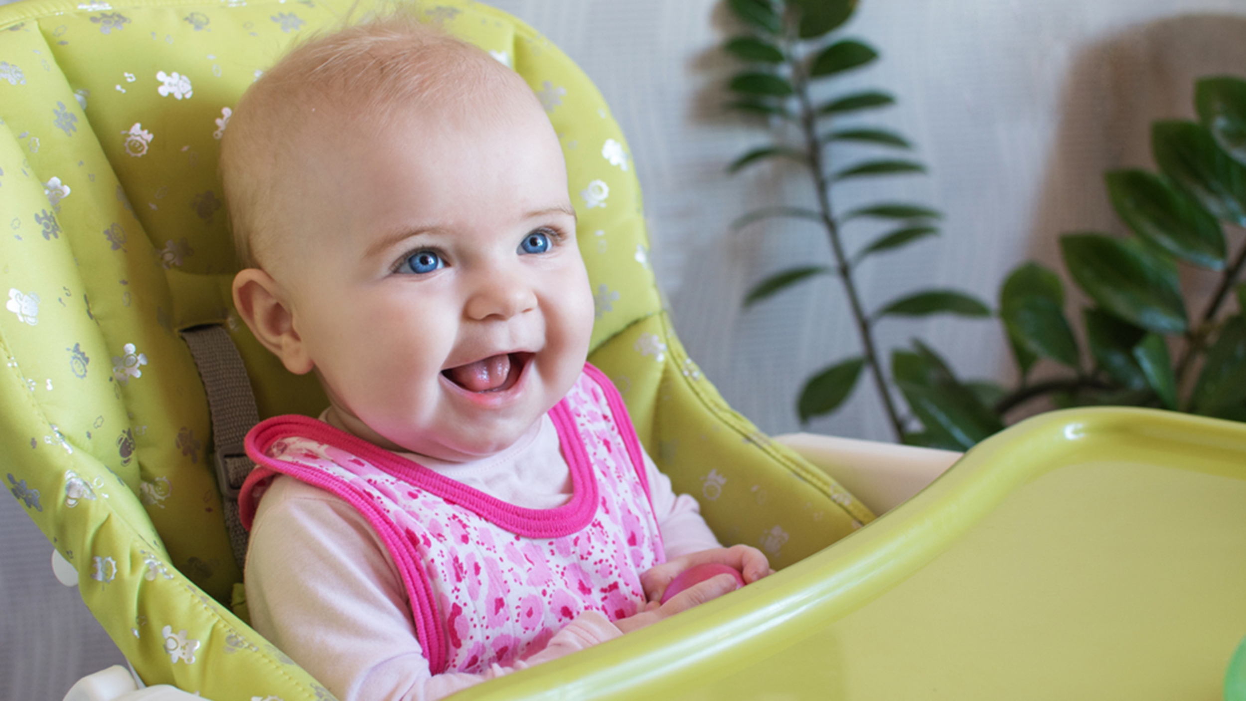 Baby Food Chair Top 6 Finger Foods That Are Safe And Delicious For Infants
