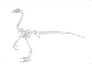 'Dinochicken' scheme puts evolution in reverse