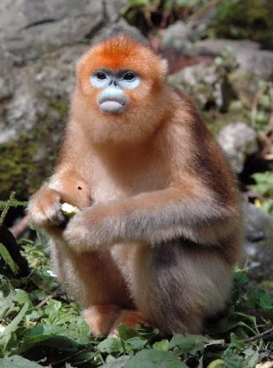 Everest trek uncovers exotic species  Technology