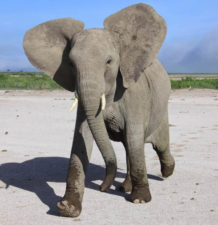 elephants can tell difference
