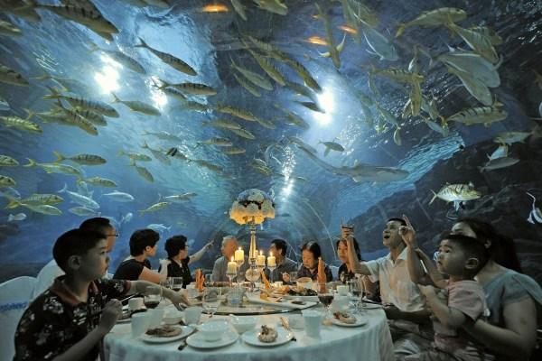 Under Sea Tourists Fish Over Dinner - Nbc