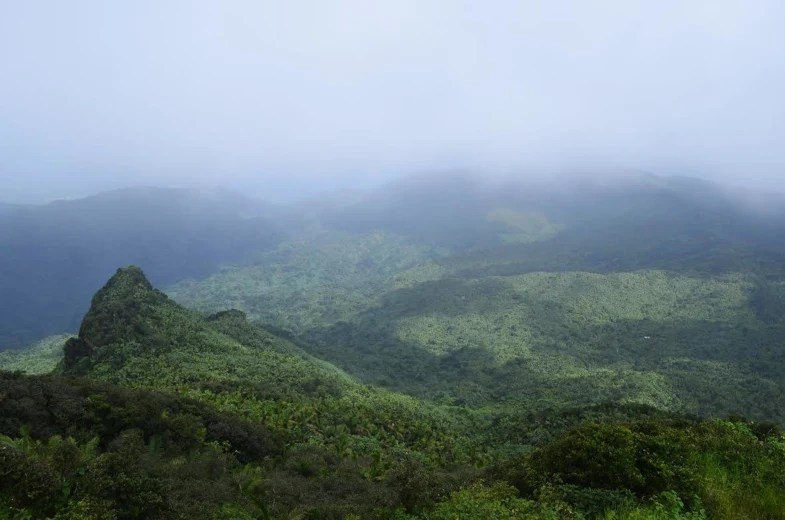 Image: El Yunque National Forest in Rio Grande, Puerto Rico.