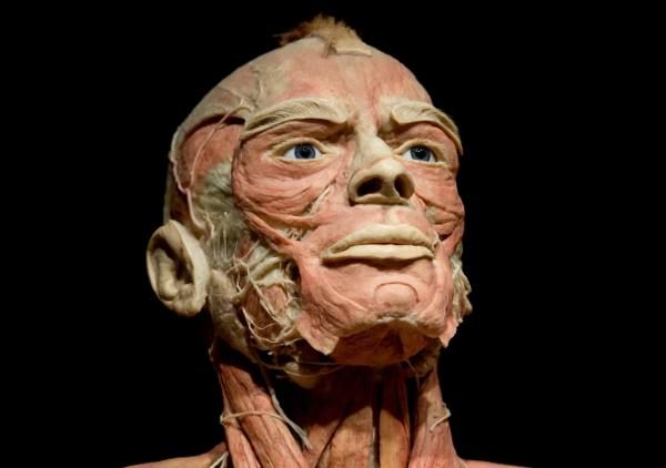 Human Body Museum Exhibit